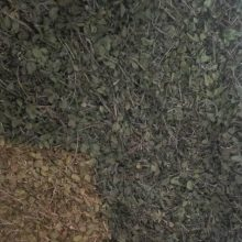 آویشن شیرازی Zataria Multiflora