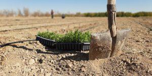 کشت گیاهان دارویی | نکاتی جامع و کامل برای کشت گیاهان دارویی