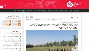گزارش خبرگزاری دانا از مزرعه زرگیاه