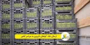 صادرات گیاهان دارویی ۱۲۰ درصد افزایش یافت
