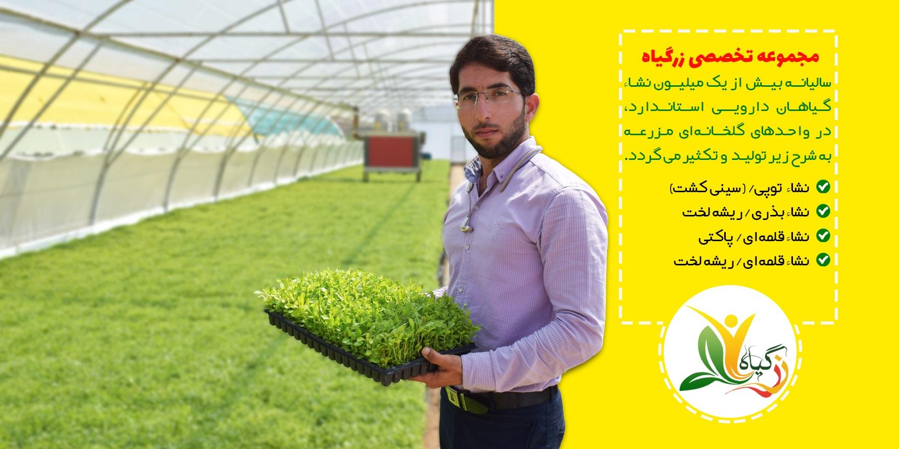 تولید نشاء در مزرعه تخصصی زرگیاه