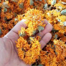 گل همیشه بهار Calendula persica