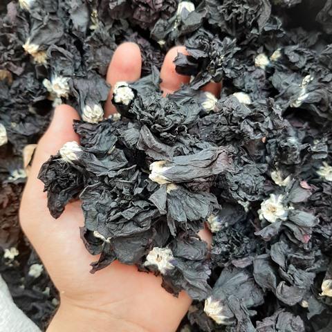 گل ختمی سیاه